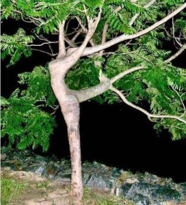 the dichotomy of Egyptian dance....Rooted to fly